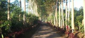 Beautiful lane at the coffee plantation